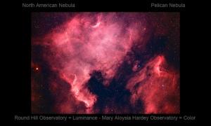 2014North American-Pelican-RHO-MAH-HA-RGB-LL